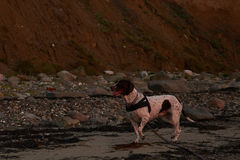 Por do sol na praia de Knud em Dinamarca Fotos de Stock Royalty Free
