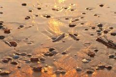 Por do sol na praia do mar Imagem de Stock