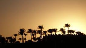 Por do sol na praia em torno do oceano e das palmeiras Lapso de tempo vídeos de arquivo