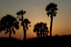 Por do sol na praia Florida do clearwater fotos de stock royalty free