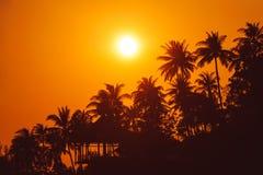 Por do sol na praia tropical com silhuetas das palmeiras Fotos de Stock