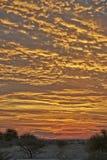 Por do sol na reserva central do jogo de Kalahari Fotografia de Stock