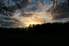 Por do sol na vista a mais forrest através dos ramos sobre uma lagoa imagem de stock