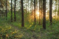 Por do sol nas madeiras Foto de Stock