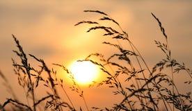 Por do sol/nascer do sol do trigo imagem de stock