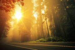 Por do sol nevoento da sequoia vermelha fotos de stock