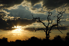 Por do sol no arbusto africano (África do Sul) Fotos de Stock Royalty Free