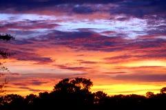 Por do sol no bosque 2 da noz Imagem de Stock