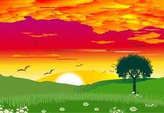 Por do sol no campo, Fotografia de Stock Royalty Free