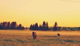 Por do sol no campo Imagem de Stock