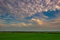 Por do sol no campo do arroz em Tailândia fotos de stock royalty free