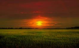 Por do sol no campo de almofada foto de stock royalty free
