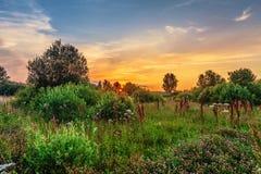 Por do sol no campo do verão Imagens de Stock Royalty Free