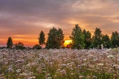 Por do sol no campo do verão Imagem de Stock