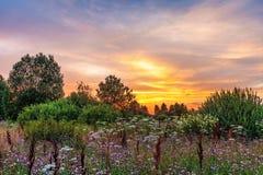 Por do sol no campo do verão Fotografia de Stock