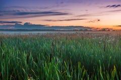 Por do sol no campo do verão Imagem de Stock Royalty Free