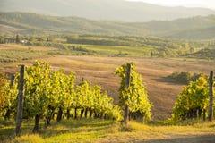 Por do sol no Chianti Imagens de Stock Royalty Free