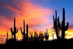 Por do sol no deserto. Fotografia de Stock