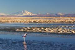 Por do sol no deserto de Atacama imagens de stock royalty free