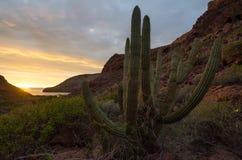 Por do sol no deserto mexicano imagem de stock