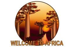 Por do sol no emblema africano 3 da floresta do baobab Fotos de Stock Royalty Free