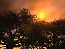 Por do sol no Forrest Fotografia de Stock