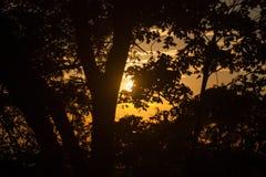 Por do sol no fundo da floresta Imagem de Stock