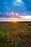 Por do sol no horizonte com o céu sobre um campo rural e o mar no fundo Por do sol, nascer do sol sobre o campo rural do prado imagem de stock royalty free