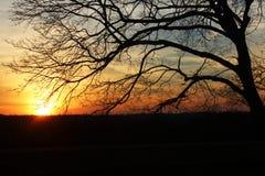 Por do sol no inverno sobre um campo de exploração agrícola do vinhedo fotografia de stock royalty free