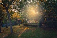 Por do sol no jardim Imagem de Stock Royalty Free