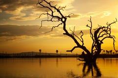 Por do sol no manze do lago em África - reserva selous do jogo do parque nacional em Tanzânia fotografia de stock royalty free