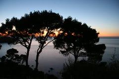 Por do sol no mar com pinetrees Fotografia de Stock Royalty Free