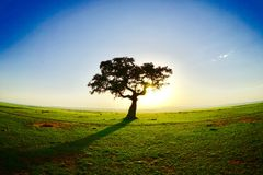 Por do sol no Masai imagem de stock royalty free