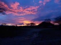 Por do sol no meio do Serengeti Foto de Stock Royalty Free