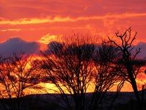 Por do sol no meio do Serengeti Fotografia de Stock