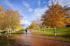 Por do sol no outono fotos de stock royalty free