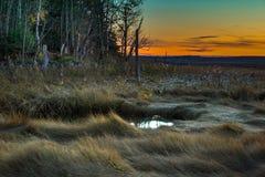 Por do sol no pântano Imagens de Stock Royalty Free