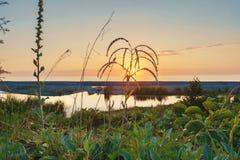 Por do sol no pântano fotografia de stock royalty free