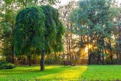 Por do sol no parque Fotos de Stock