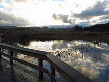 Por do sol no parque Foto de Stock Royalty Free