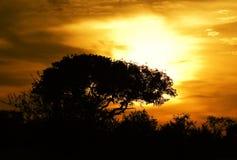Por do sol no parque de Kruger Fotos de Stock