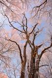 Por do sol no parque de Toila-Oru. Imagem de Stock Royalty Free