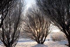 Por do sol no parque do inverno fotos de stock royalty free