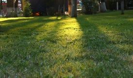 Por do sol no parque natural Imagens de Stock