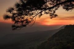 Por do sol no penhasco, com as silhuetas da árvore (Pha Mak Duk) no parque nacional de Phukradung, Tailândia Foto de Stock Royalty Free