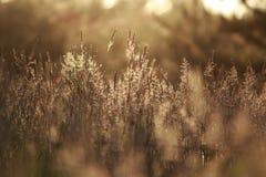 Por do sol no prado Imagens de Stock Royalty Free