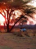 Por do sol no safari Fotografia de Stock