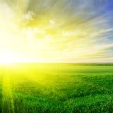 Por do sol no verão Foto de Stock