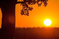 Por do sol no verão com árvore Imagem de Stock