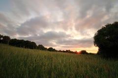 Por do sol no verde foto de stock
